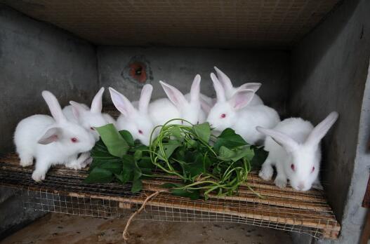常见的肉兔养殖方法?