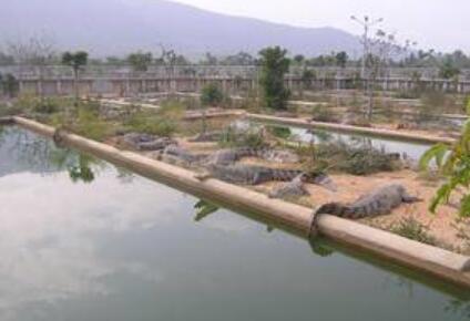 鳄鱼养殖场要怎么建造?
