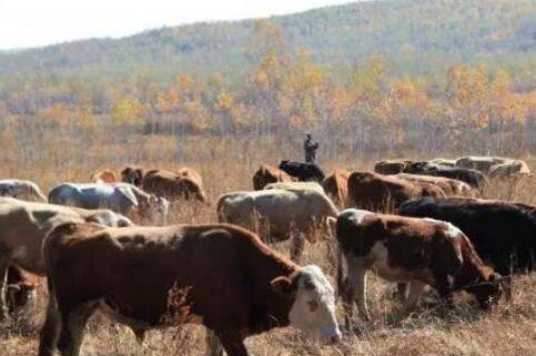 养十头牛与打工究竟那个好懂行的来?