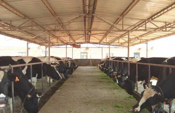 开办一家小型养牛场需要多少钱?