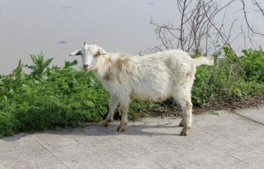 养羊20只一年可以赚多少钱?