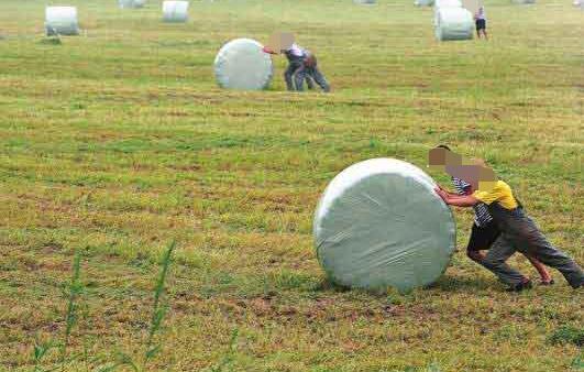 养羊一般种什么牧草效益好?