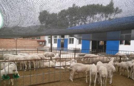 养羊的利润一般有多少?