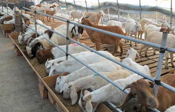 农村养羊有什么补贴吗?