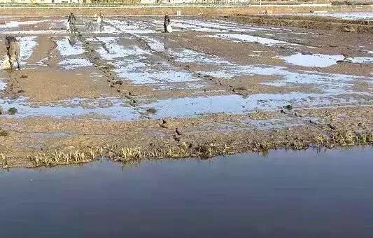 2020年养殖小龙虾究竟还能不能赚到钱?