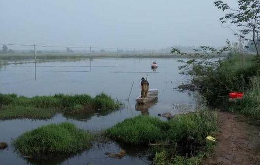 养殖小龙虾对水位要求多深合