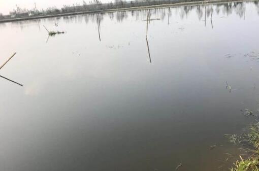 冬季小龙虾池塘是否就没必要肥水了?