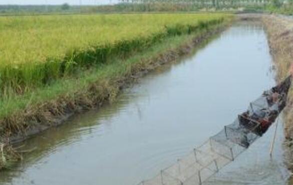 稻田龙虾养殖100亩成本要多少?