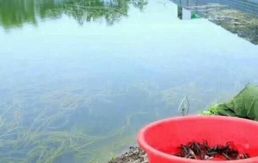 当前养一百亩龙虾利润多少?