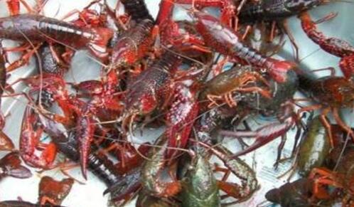 小龙虾养殖一亩投资成本要多少5000够吗?