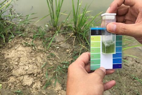 小龙虾养殖池水体的PH值偏高
