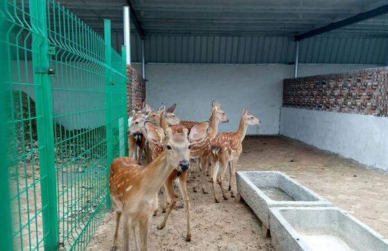 人工养殖的梅花鹿喂养什么饲料及配方?