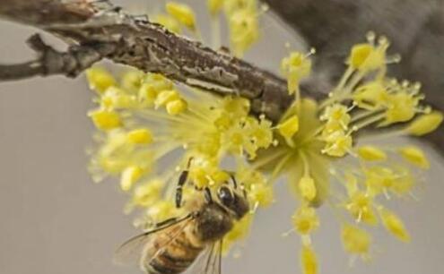 要是杀死蜂王蜜蜂会怎么样会不会都跑了?