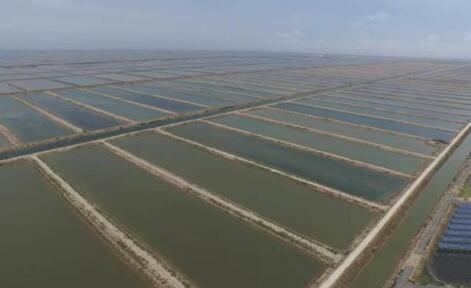 基围虾养殖基地哪些地方有?