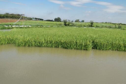 新开的小龙虾塘水草种植之后要怎么肥水?