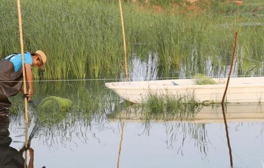3月份小龙虾池塘日常管理和工作任务有哪些?