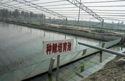 大棚养殖泥鳅要怎么养?