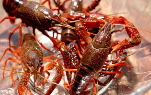 2019小龙虾养殖上半年如何把钱赚了?
