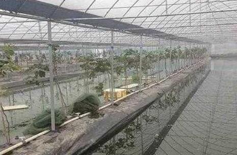 当前泥鳅养殖成本和利润分别有多少?