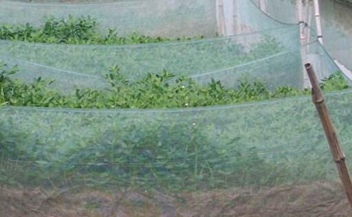 不同阶段养殖黄鳝的主要风险有哪些怎么预防?