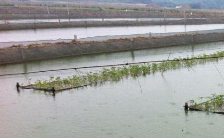 无土泥鳅养殖利润有多少?