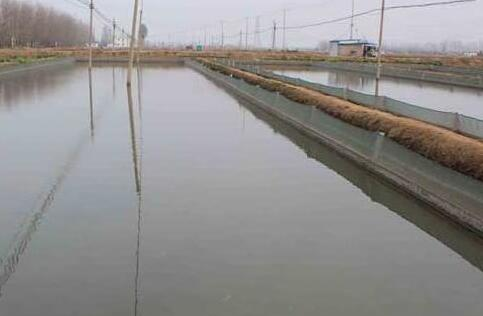 常见的网箱泥鳅养殖技术都有哪些?