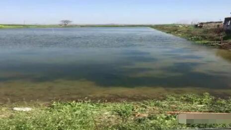 小龙虾池桡足过多水不好肥怎