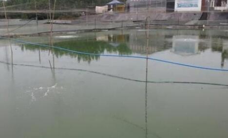 池塘养泥鳅要怎么养?