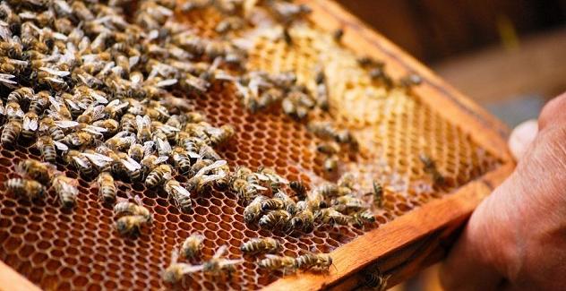 开个小型养蜂场能赚钱吗?