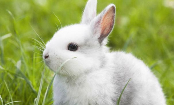 养殖兔子利润有多少?