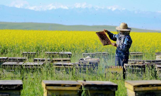 养蜂赚钱吗?