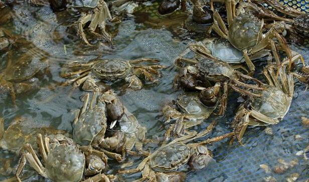 阳澄湖大闸蟹什么季节吃最好,最肥呢?