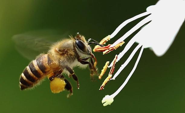 养40箱蜂一年能赚多少钱 ?