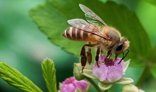 养中蜂最忌些什么东西?