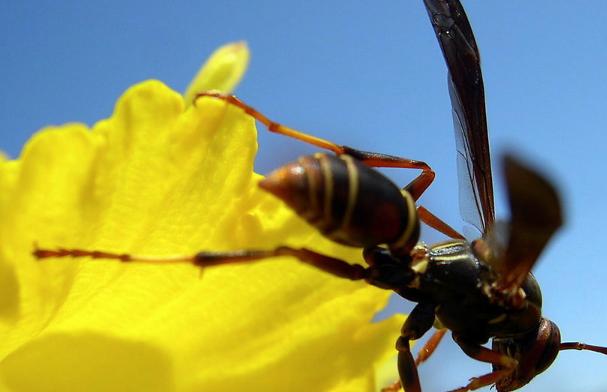 蜜蜂蛰消肿止痛的最快方法有哪些?