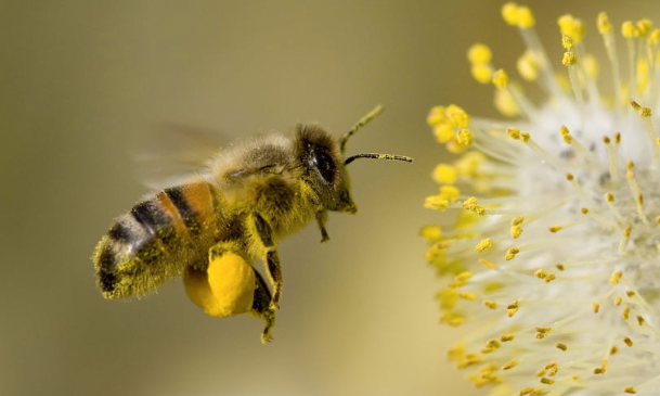 新手养蜂入门 技术有哪些?