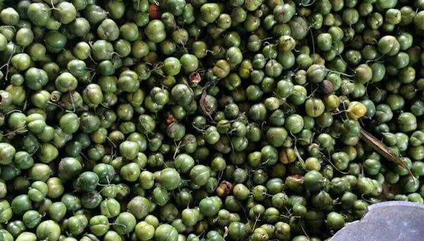 市场上黄精种子卖多少钱一斤呢?