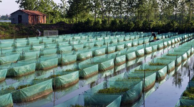 2020养殖一亩黄鳝利润有多少?