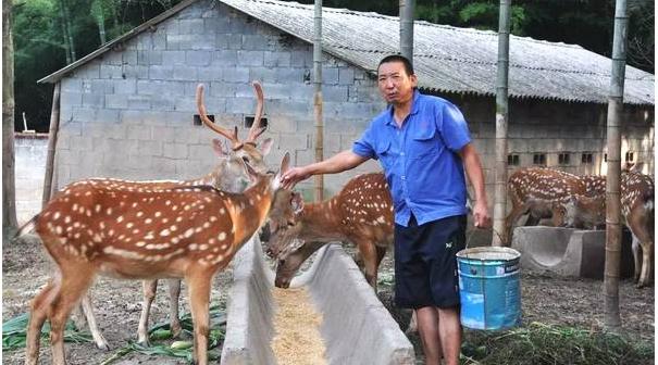 养20头鹿一年能赚的钱有多少?
