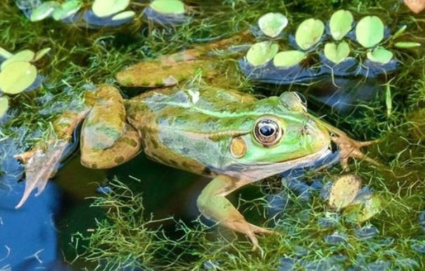 2019青蛙市场最新价格多少呢?