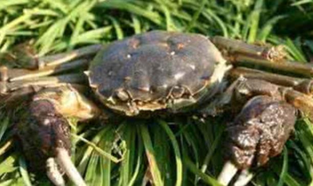 阳澄湖大闸蟹一只的价格多少?