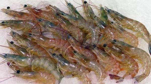 养殖基围虾与明虾的区别有哪些?