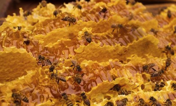 孕妇喝蜂蜜水好不好_男人喝蜂蜜对身体好不好呢?