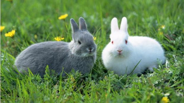 兔子的养殖与利润_养殖兔子快要死有症状吗?