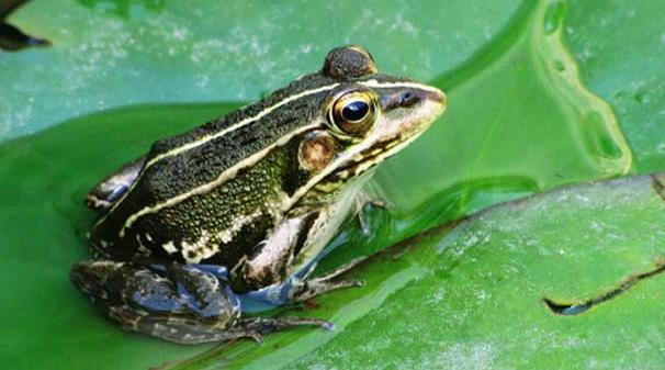 青蛙养殖的前景好吗?养殖利润怎么样?
