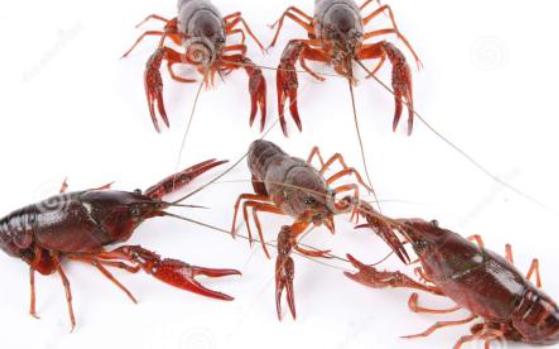 养殖小龙虾一亩利润如何?