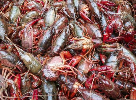 怎么样养殖龙虾最好