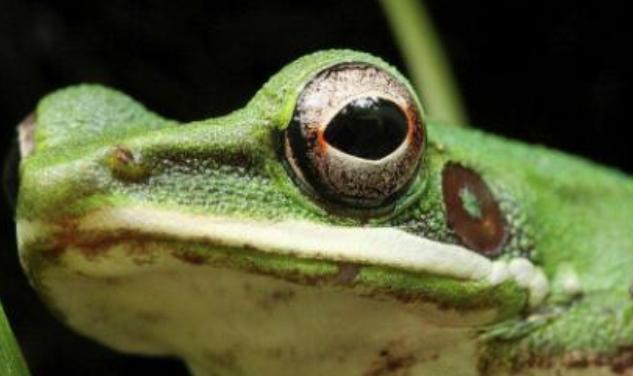 养3亩地的青蛙本钱需要投入多少?