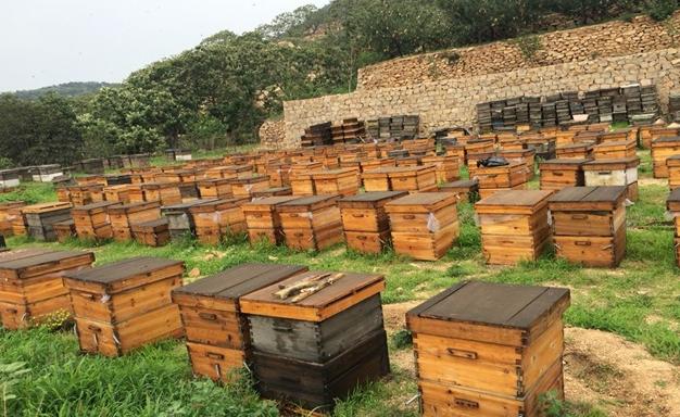 被蜜蜂蛰了几天才能消肿止痒?消肿有什么办法?