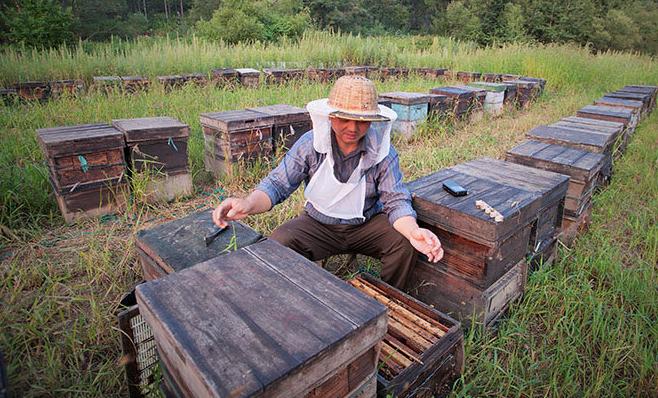 南方养殖蜜蜂技术上有什么一样的?